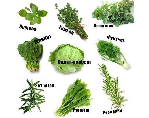 Травы и салаты
