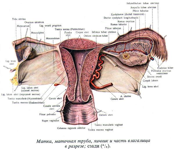 Как узнать тонус матки при беременности