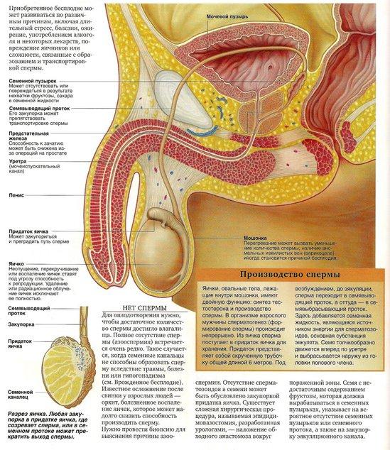 vibros-spermi-pri-polovom-akte