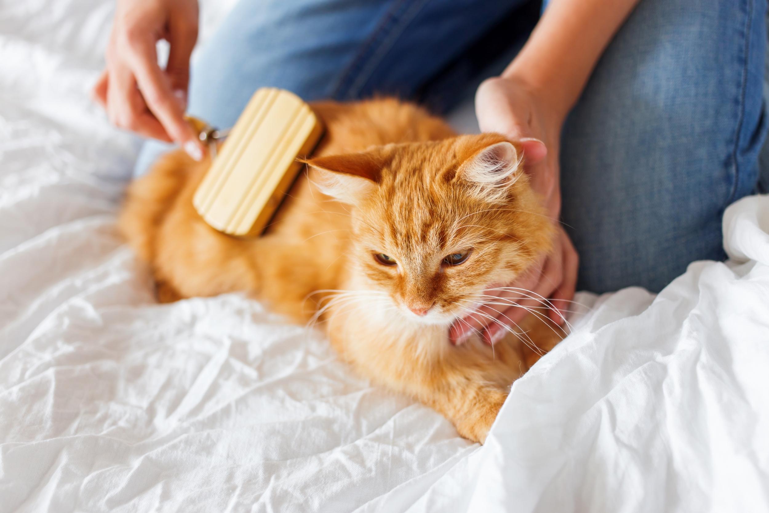 cat rubbing back on carpet