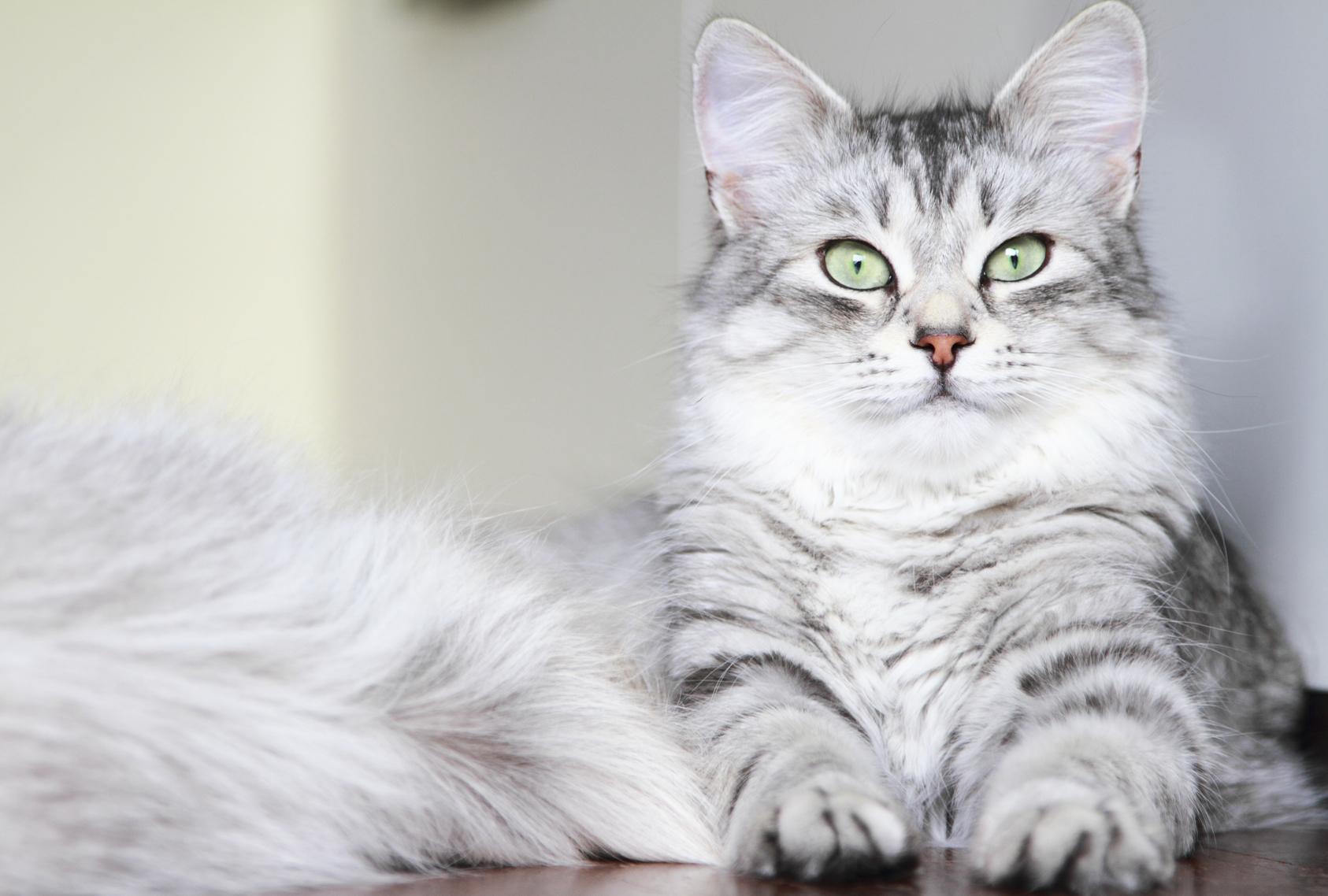 как похудеть коту кастрированному в домашних условиях